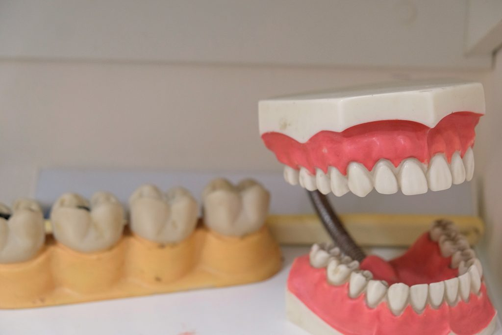 dentist-teeth-model